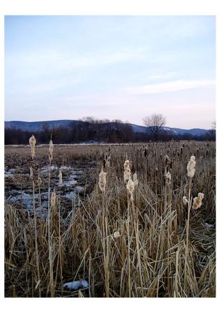 Marsh - Warwick, NY